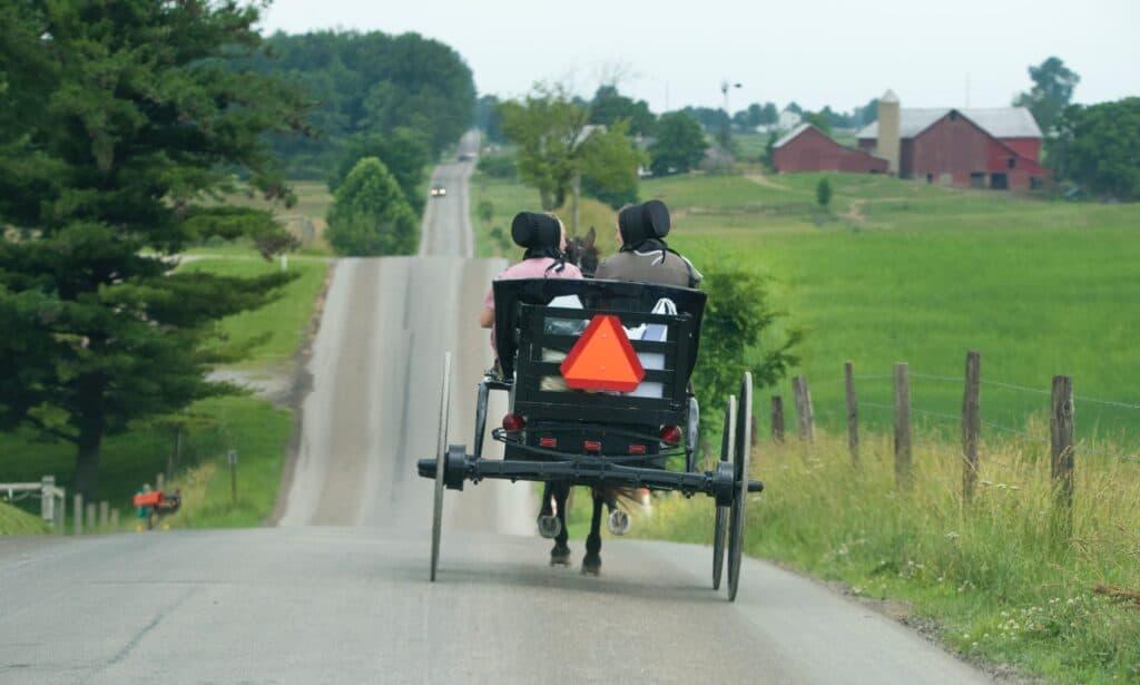 amish ladies in buggy