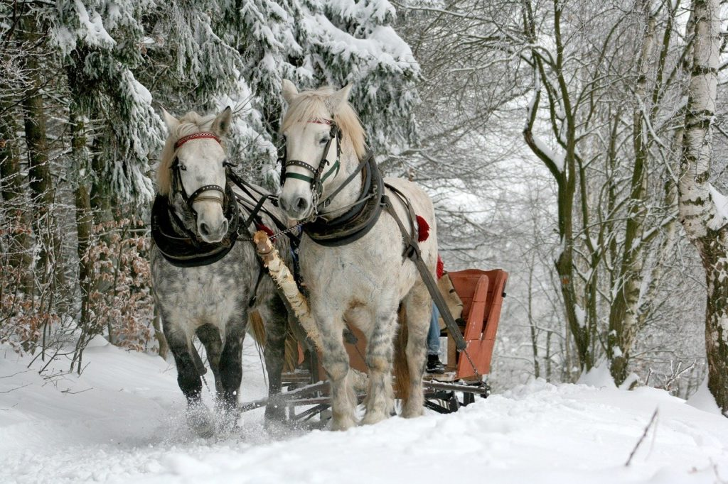horses and sleigh